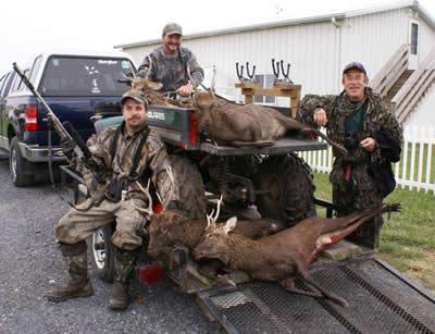 Sika Stag Deer Hunting