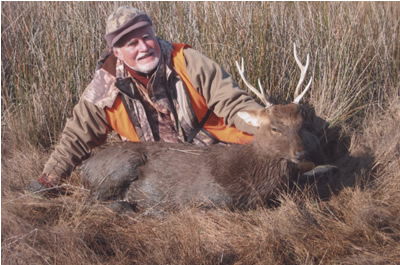 sika deer guided hunts