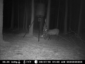 trail camera pics